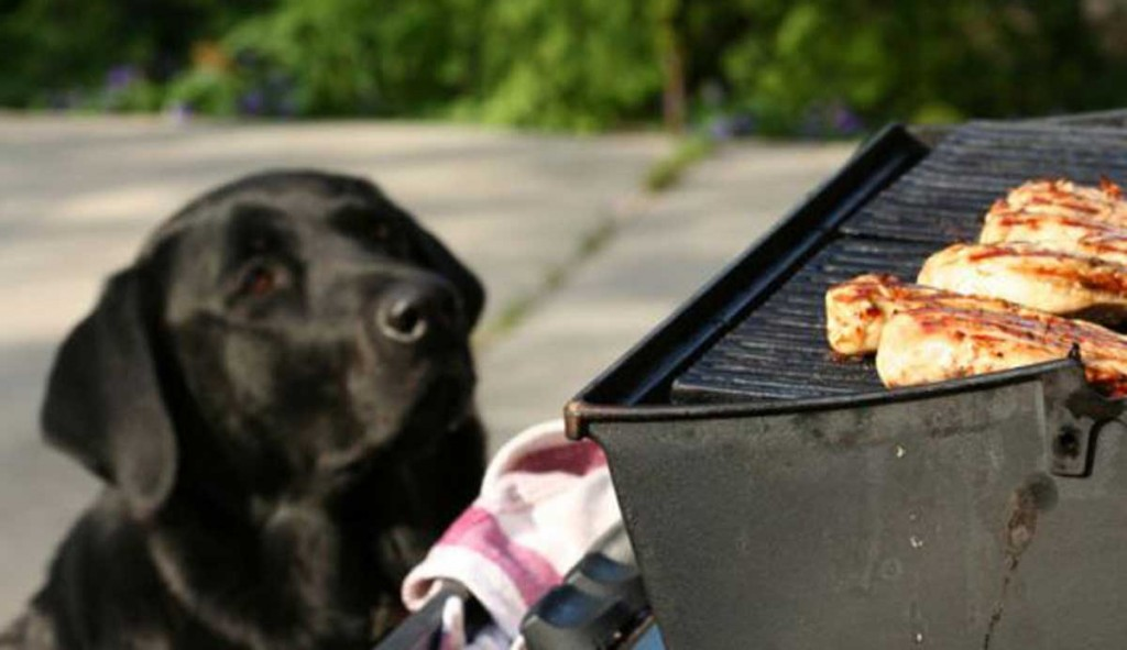 BBQ-dangers-for-dogs