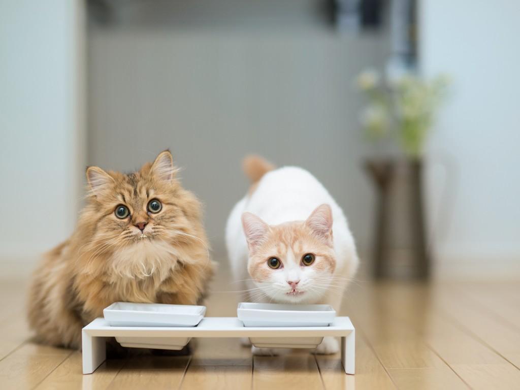 fotos-de-gatos-comiendo
