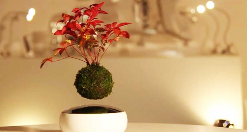 port-bonsai-1024×546